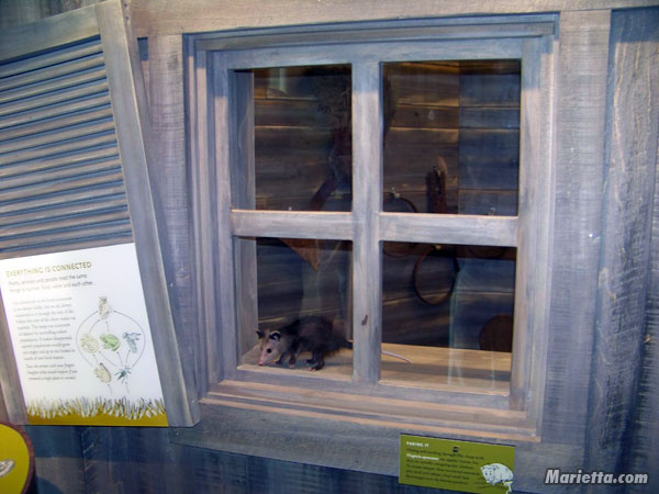 Discovery Center Possum Habitat