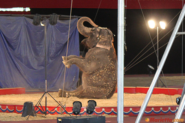 yaarab-shrine-circus-elephant
